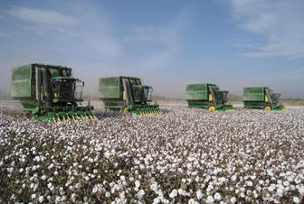 Over 190,000 tons of cotton harvested in Azerbaijan